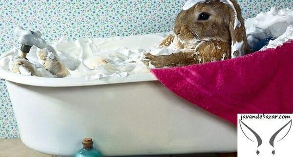 حمام کردن خرگوش