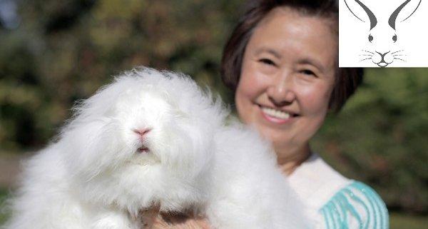 خرگوش آنقوره پشمی