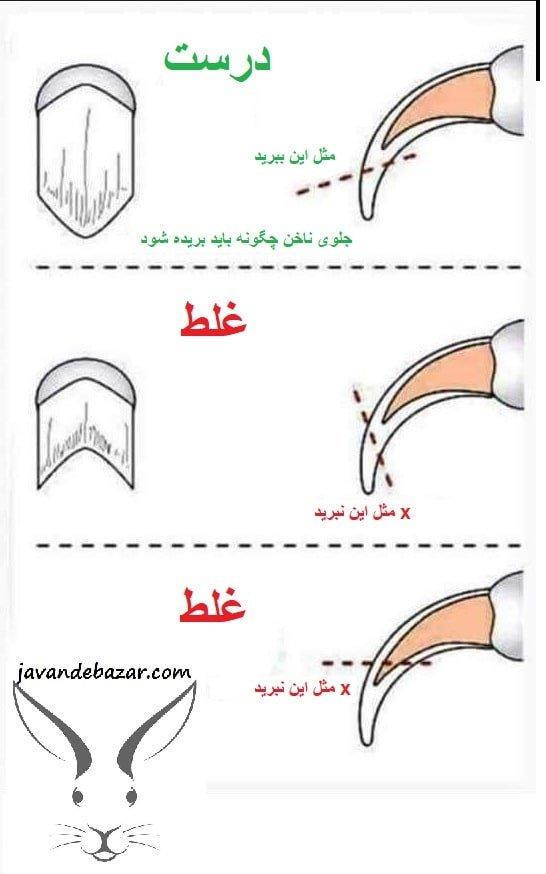 کوتاه کردن ناخن جونده