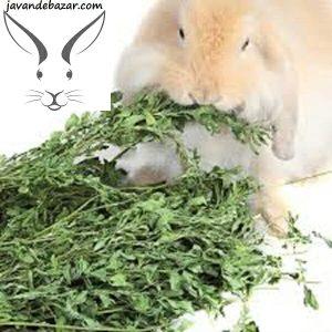 یونجه خشک مخصوص خرگوش خوکچه هندی