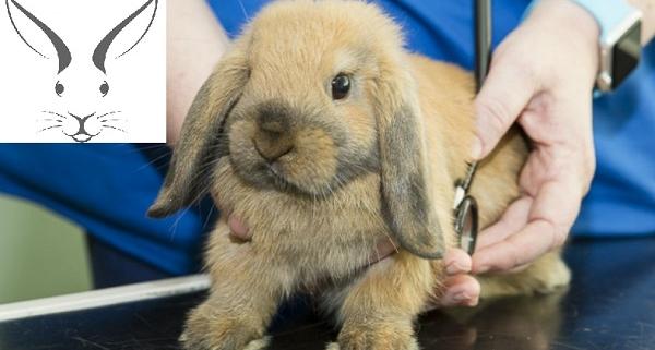 بیماری مشترک انسان و خرگوش