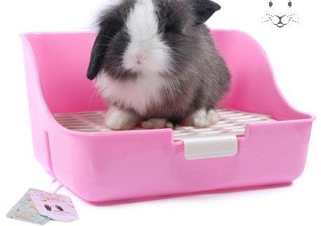 آموزش دست شویی خرگوش