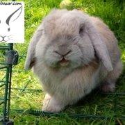مراقبت نگهداری رسیدگی خرگوش لوپ