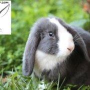 دانستنی های خرگوش