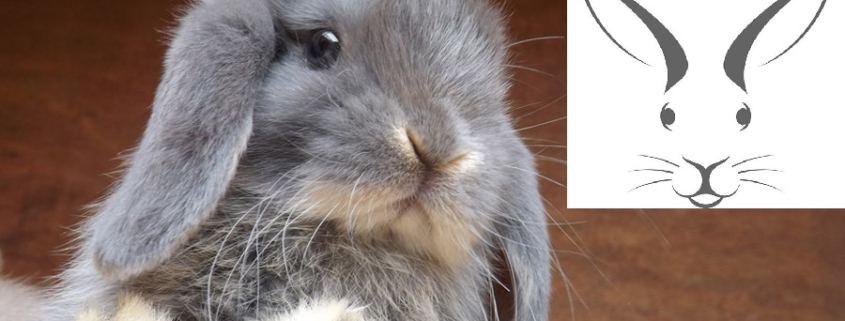 ادرار خرگوش