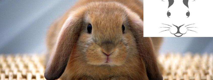عقیم خرگوش