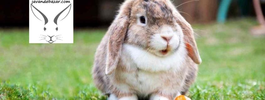 غذا ممنوع خرگوش