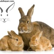 پریود خرگوش