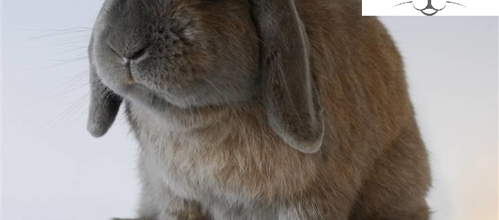 تربیت خرگوش لوپ