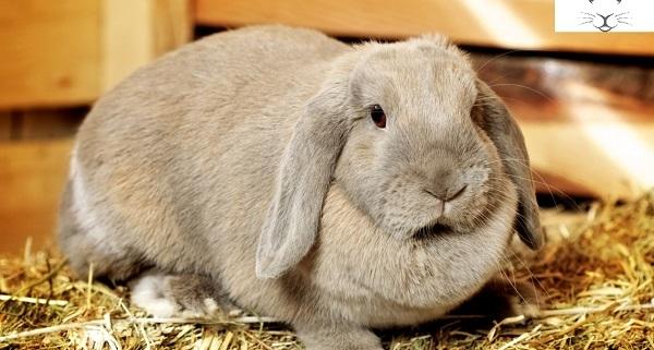 خرگوش گاز می گیرد