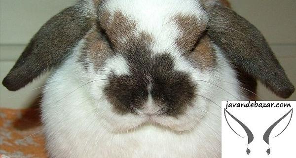 خواب خرگوش