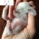 شیر خوردن خرگوش