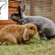 واگذاری خرگوش