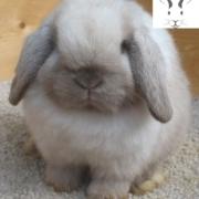 نشانه خرگوش بیمار