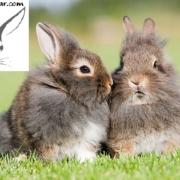 علائم مرگ خرگوش
