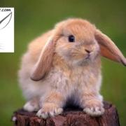 آیا خرگوش بو می دهد ؟