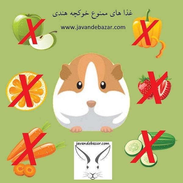 غذا های ممنوع خوکچه هندی
