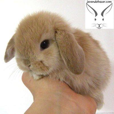 بعد از خرید خرگوش